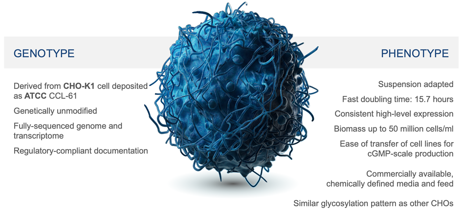 high-performance CHO cell line for protein expression and monoclonal antibody production